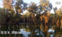 旅途久久 穿越中国14-塔里木胡杨林(房车纪录片 西域三十六国)