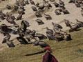 色达的佛学院和天葬台--80天的漫长文艺旅行(七)