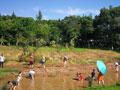田园恐龙主题房车自驾快闪活动在自贡成功举行